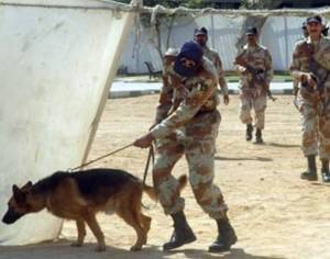 75183565-sniffer-dogs