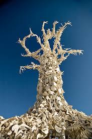 bone tree burning man